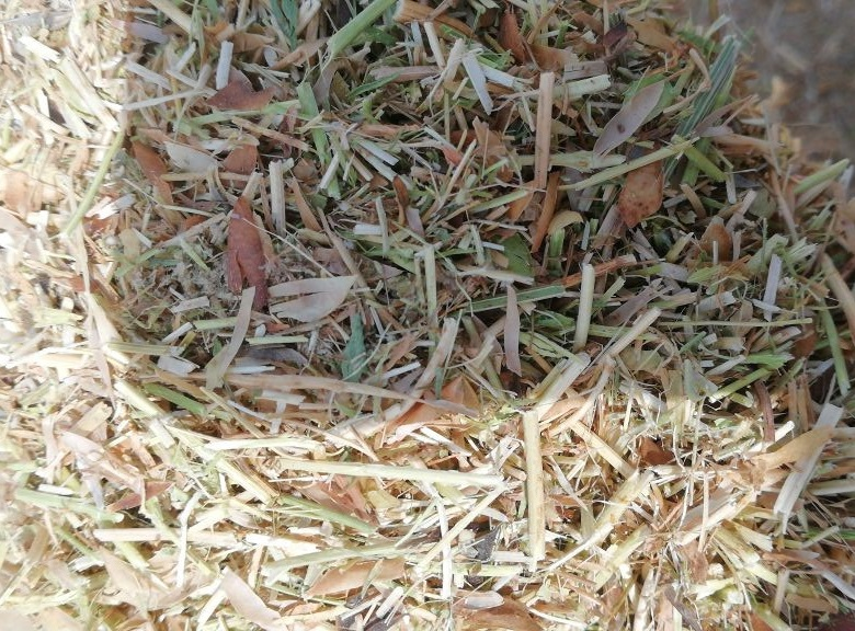Lentil Straw